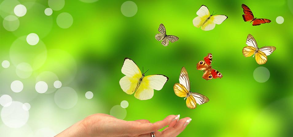 Butterflies Gam Anon